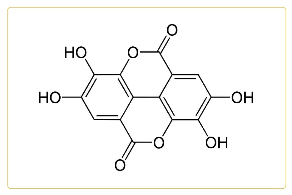 Ellagic acid: Cancer-fighting food ingredient