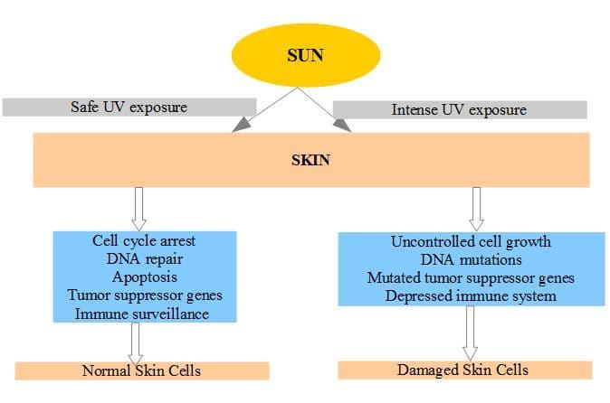 sun-and-skin-cancer-admac