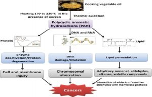Repeatedly-heated-cooking-oil-and-cancer-admac