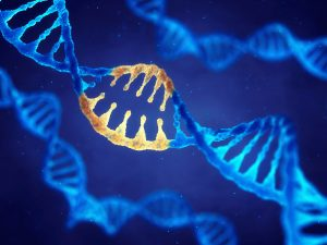 Genetic Mutations leads to Cancer